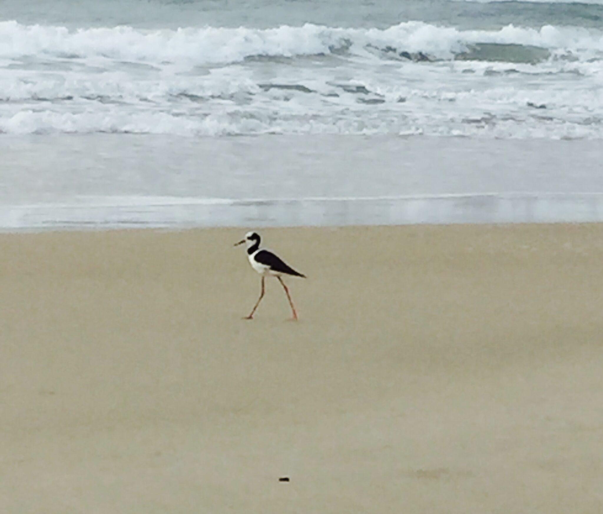 Quinta Contemplativa  na praia do Campeche